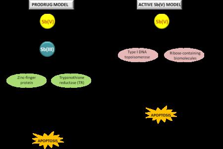Фармакодинамика препарата