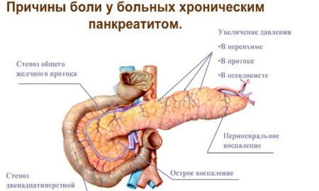 Поджелудочная железа и расторопша