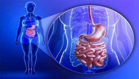 Желудок и тонкий кишечник