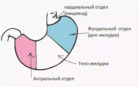 Анатомические области